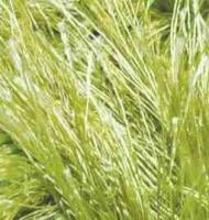 Пряжа для вязания Ализе Decofur 'Травка' (100% полиэстер) 5х100г/110м цв.0117 фисташка
